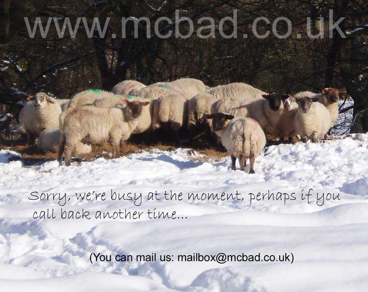 Image of sheep.